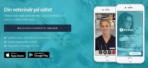 First Vet -veterinär eller specialist - kattpsykolog online