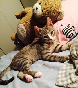 Katten Tuva