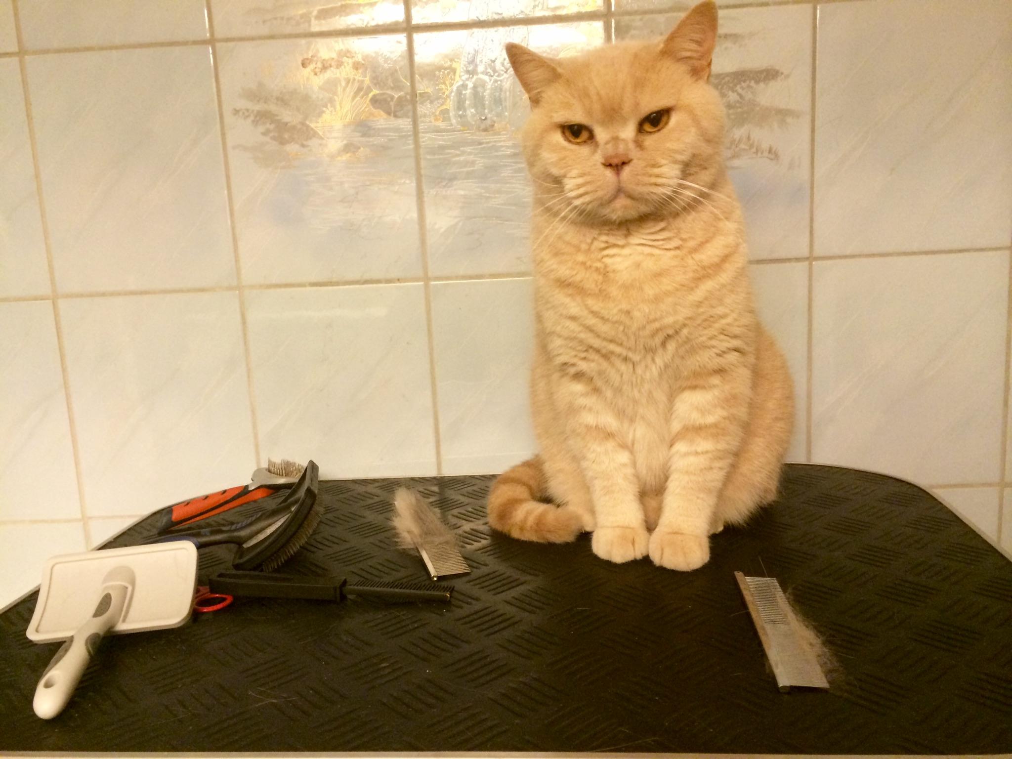 katt ålder tabell